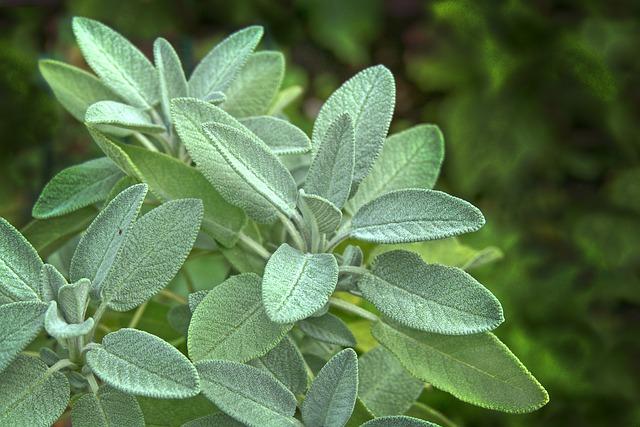 Field Herbology